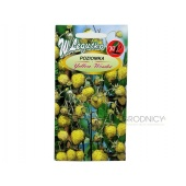 Poziomka YELLOW WONDER (Fragaria vesca) - 0,1 g